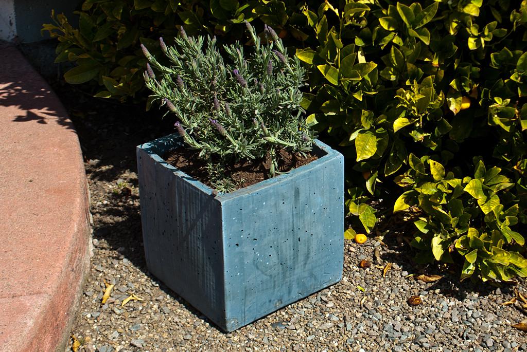 DIY Concrete Planter Box  DIY CONCRETE Planter Box