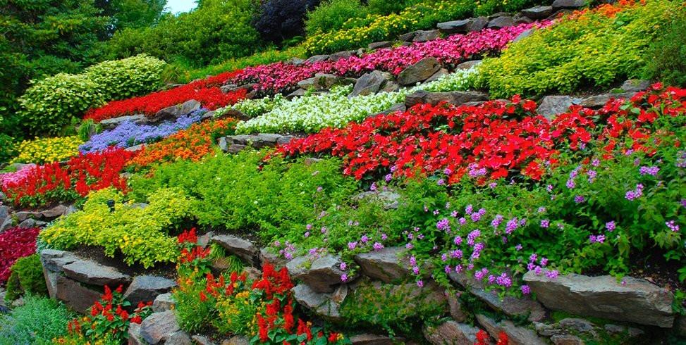 Flower Landscape Design  How to Start a Flower Garden 3 Steps for Beginners