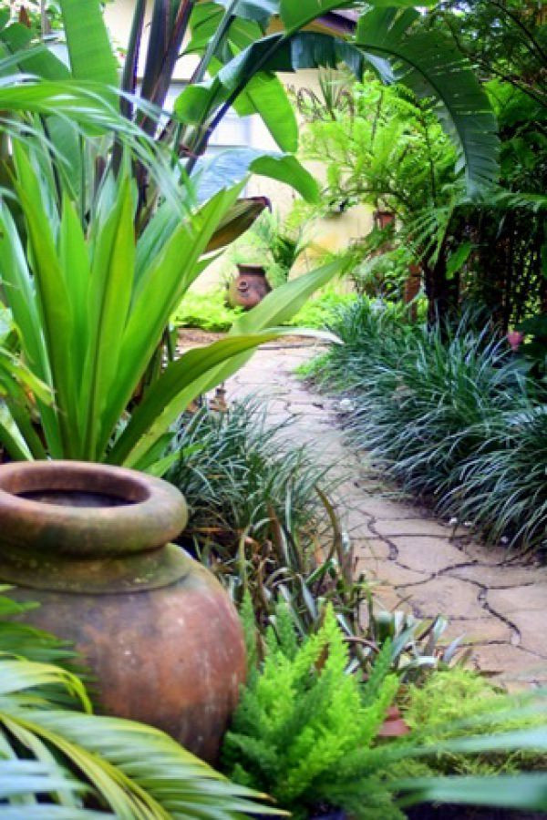Outdoor Landscape Tropical  14 Cold Hardy Tropical Plants to Create a Tropical Garden