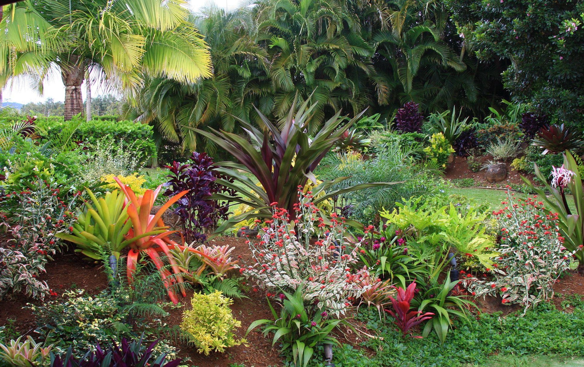Outdoor Landscape Tropical  Tropical Flower Garden Design Ideas