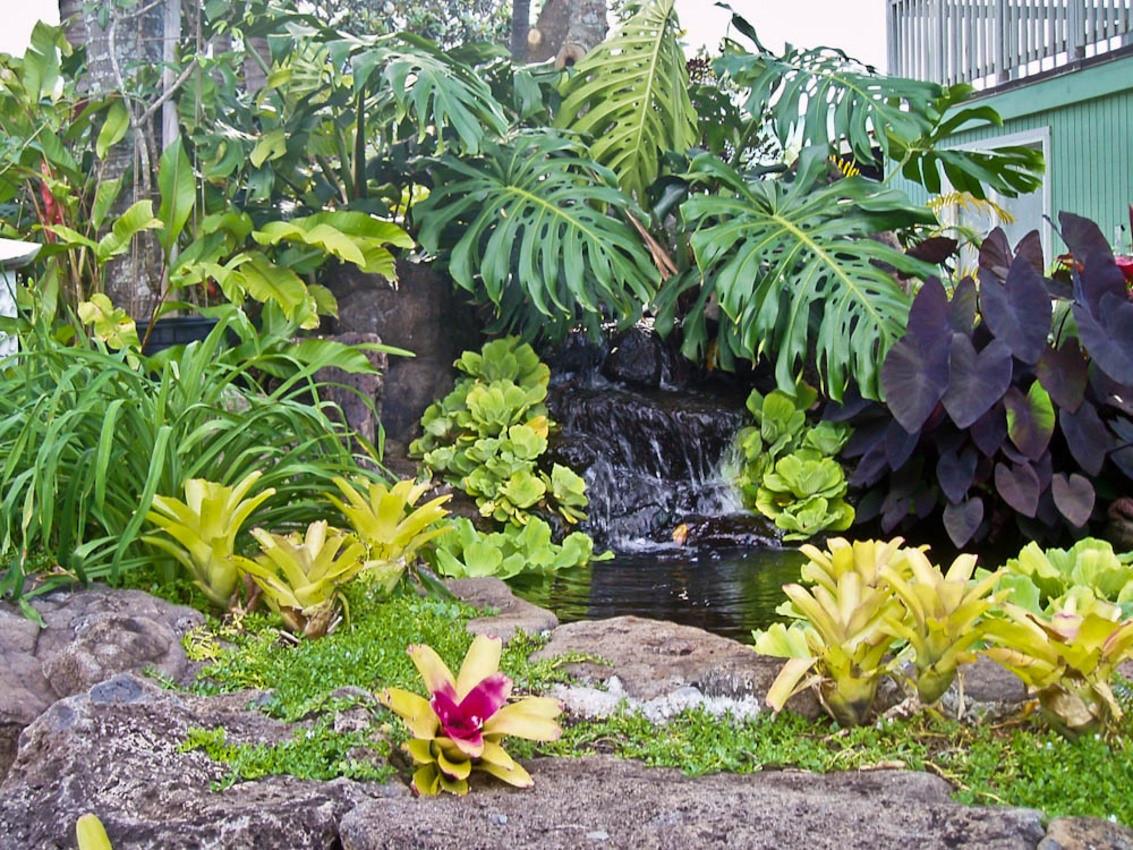 Outdoor Landscape Tropical  Tropical Garden Landscaping Ideas